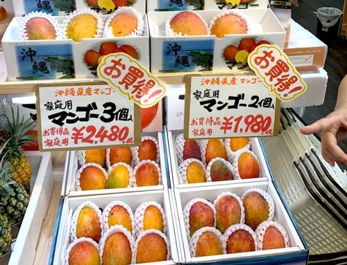 【訳あり】マンゴー(沖縄県産)の販売スタート!